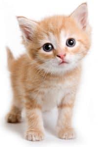 Awww! Adorable Kitten